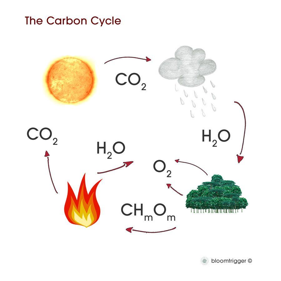 best images about green generation carbon cycle 17 best images about green generation carbon cycle earth science and stockton college