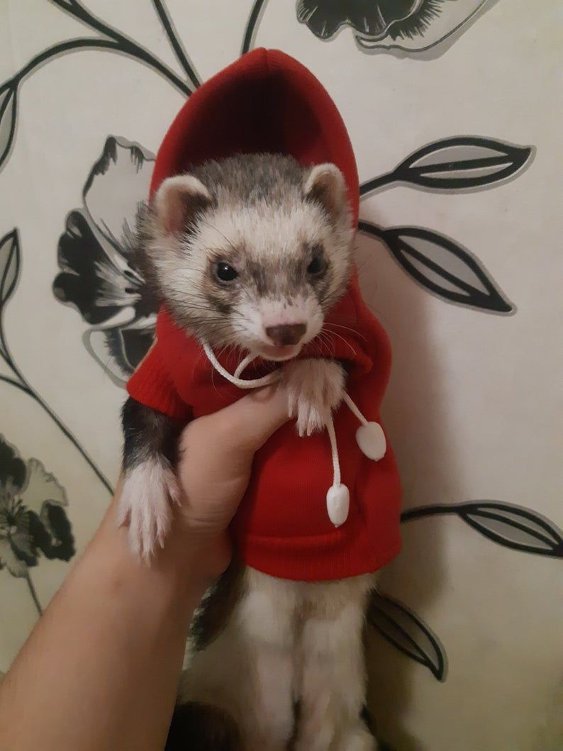 Ferret sweater hoody , clothes for ferret