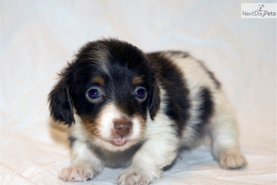 Directory Of Breeders And Shelters With Dogs And Puppies For Sale