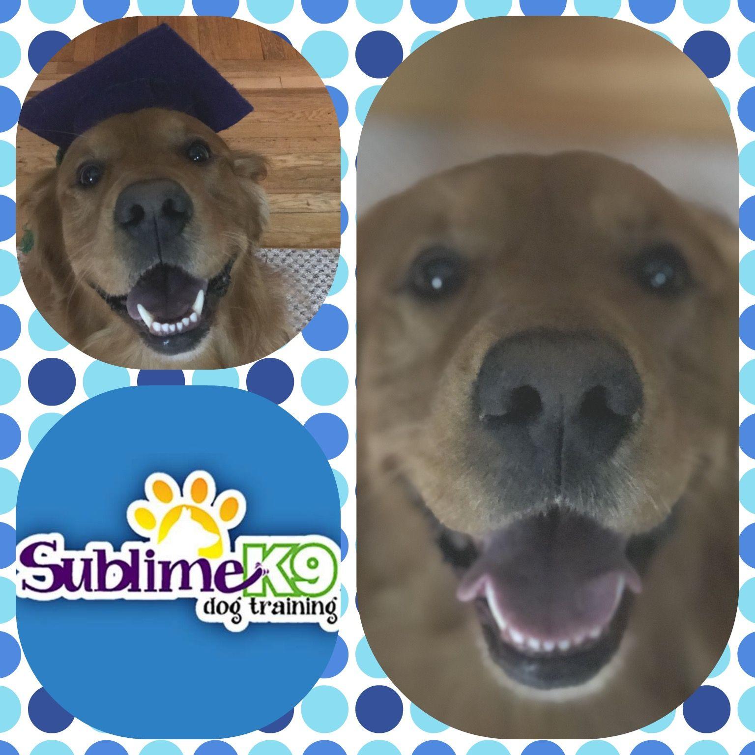 Long Island Dog Trainers Sublime K9 K9 dog training