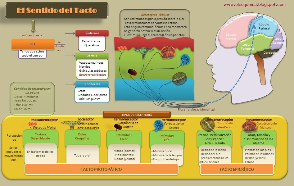 Sentido Del Tacto Senses Sense Of Touch Learning Centers