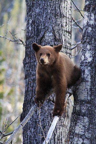 Bear by Alyce Taylor