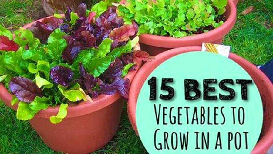 Ten Top Tips For Small Shady Urban Gardens: EndoRIOT: Container Gardening-15 Best Vegetables That Grow