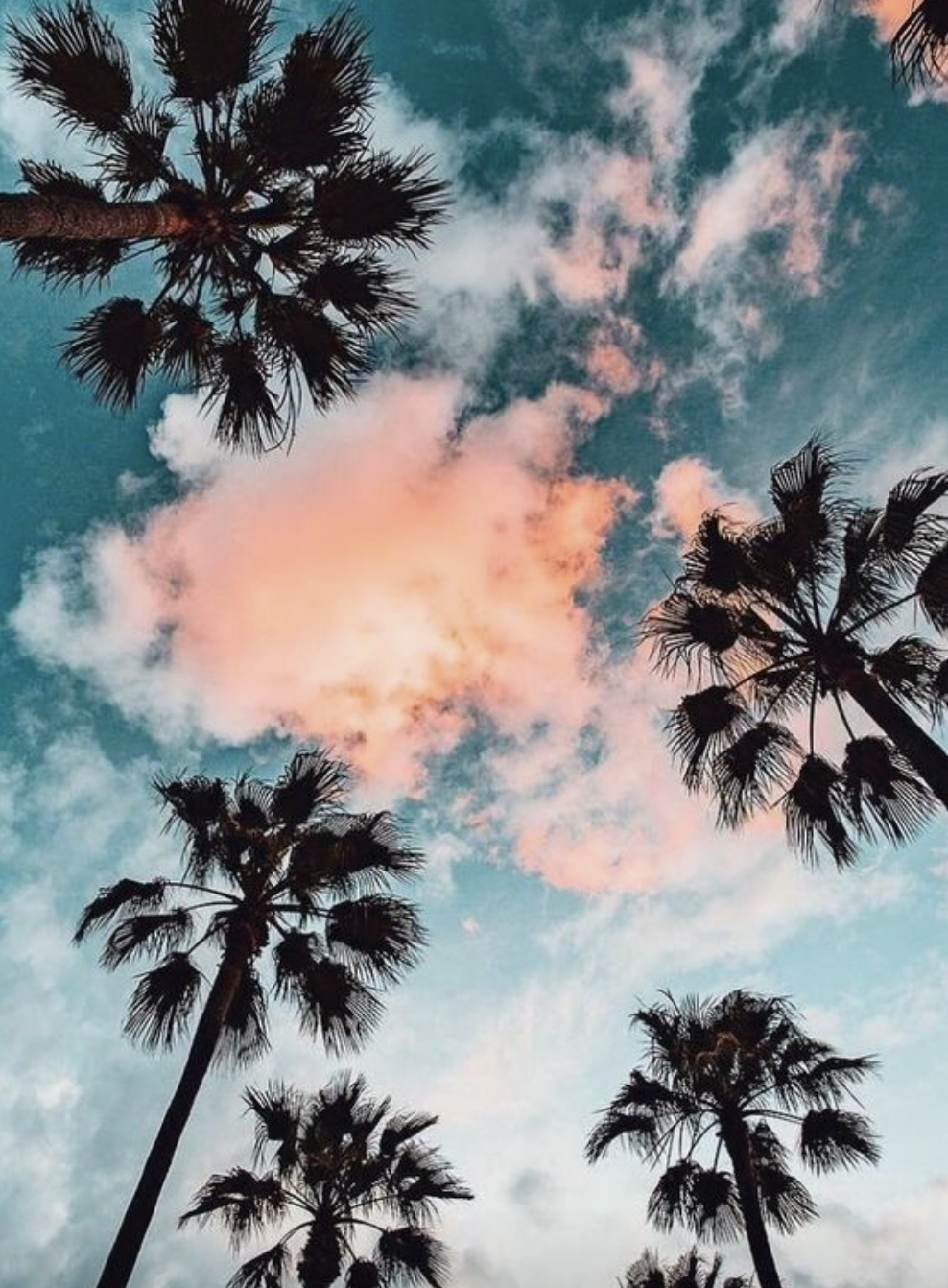 Palm Trees Sunsets Nature Photography Nature Wallpaper Tree Wallpaper