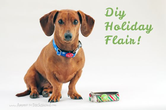 bbdb35d2158 12 Days of Cheer! DIY Holiday Dog Collar Flair    Ammo the Dachshund ...