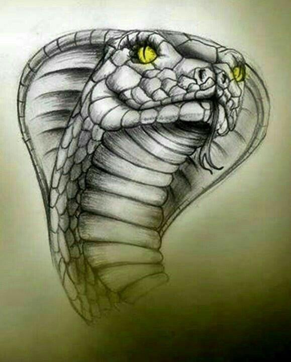 Dibujos Dibujo De Serpiente Cobra Dibujo Arte De Serpiente