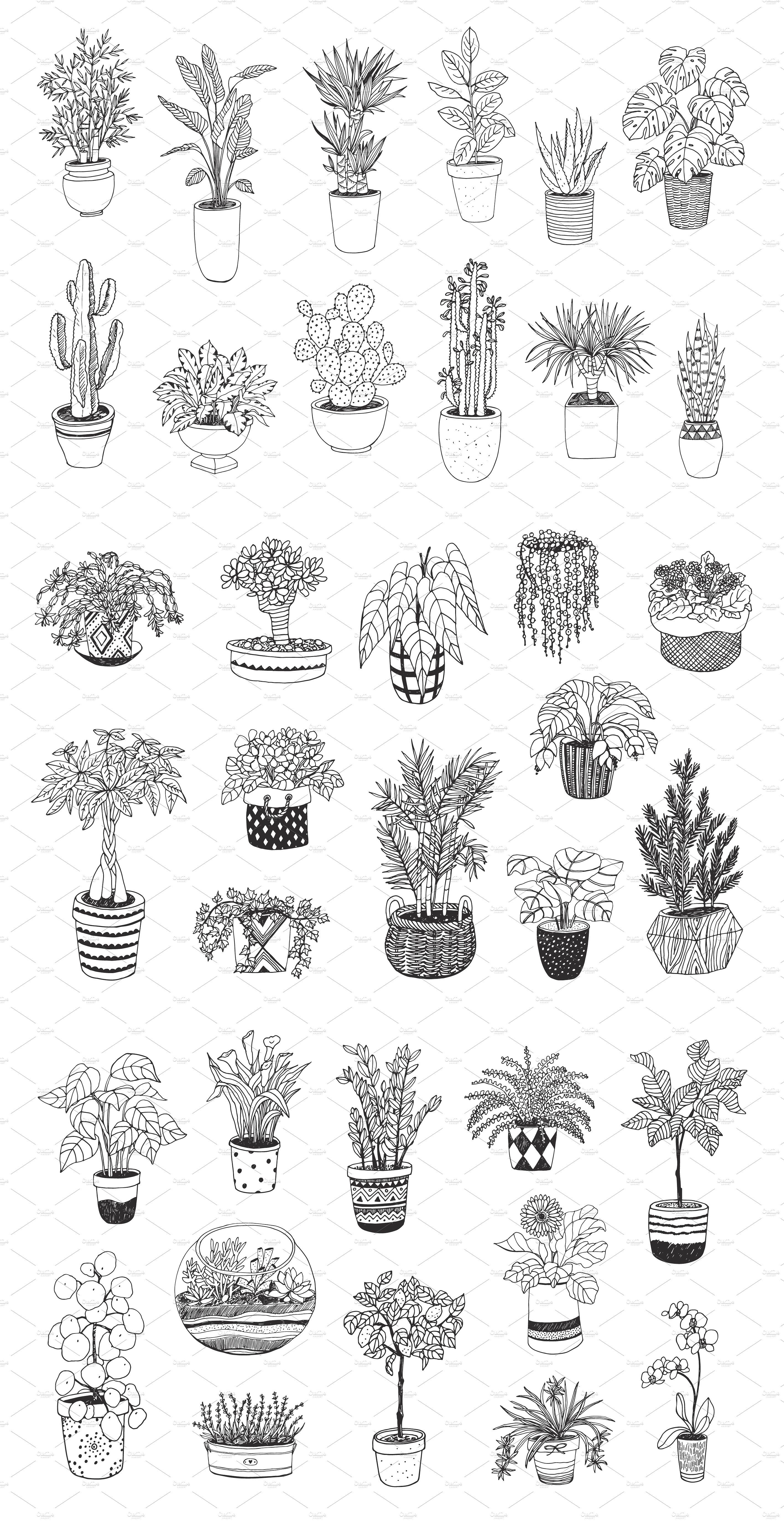 Indoor Plants Plant Tattoo Plant Sketches Plant Drawing