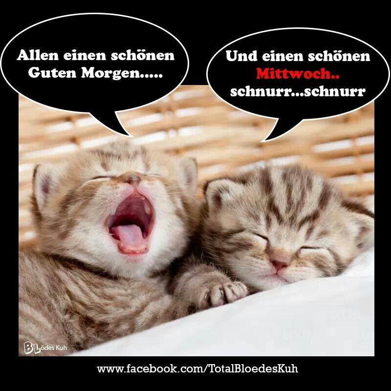 katzen katzen hunde pinterest katzen wochentage und guten morgen. Black Bedroom Furniture Sets. Home Design Ideas