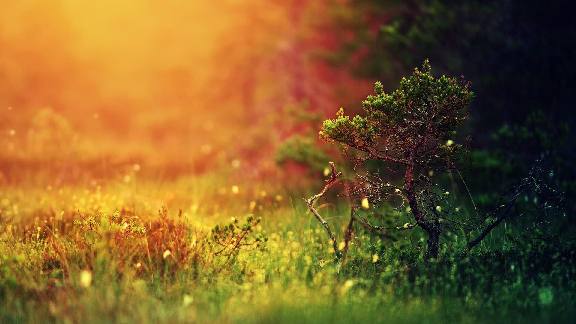 Trees Full Of Vitality Classical Hojas Verdes Plantacion De Arboles Natural