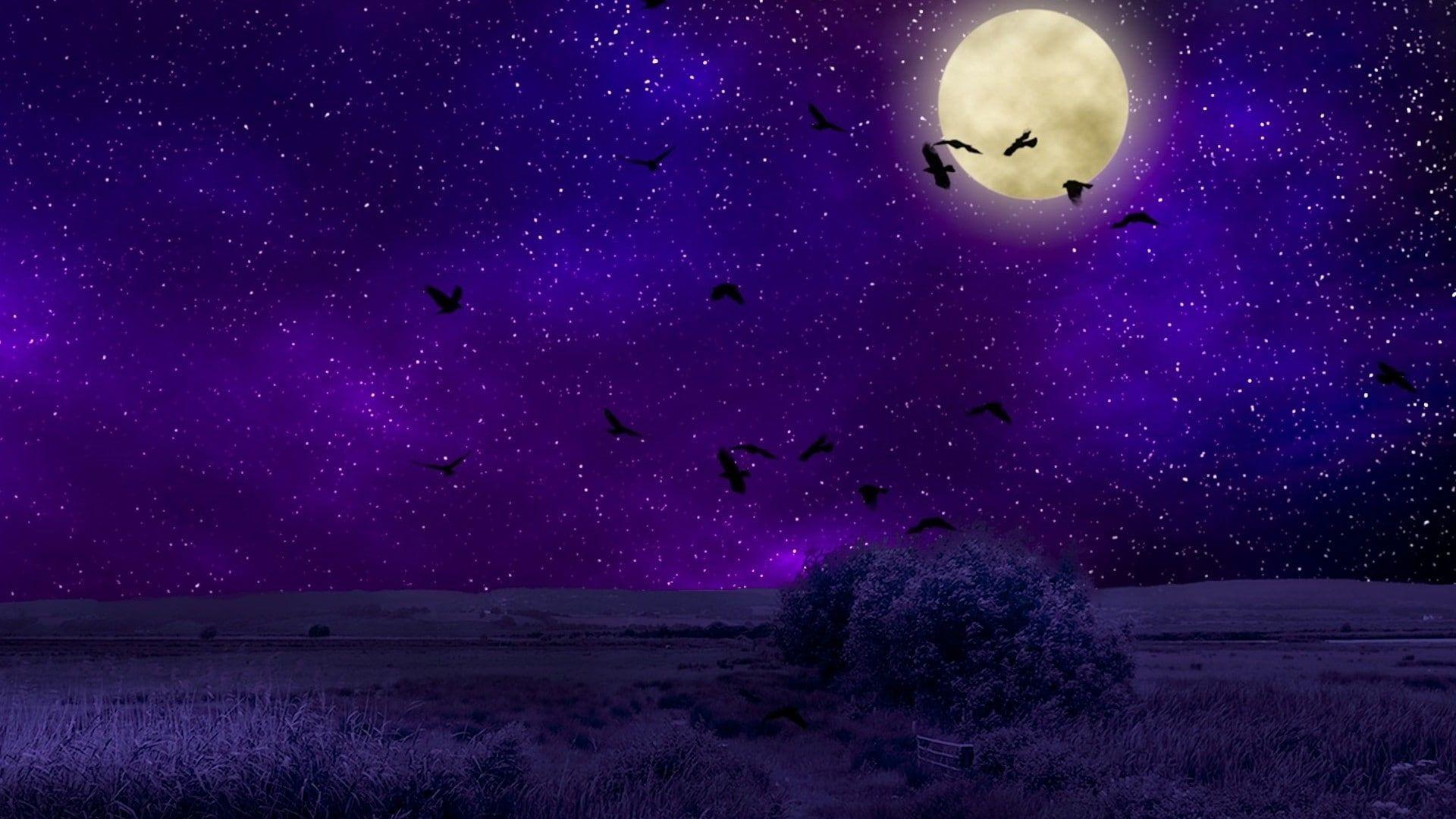 Sky Purple Night Sky Starry Night Field Night Full Moon Birds Moon Darkness Space Moonlight Stars 1080p Wa In 2021 Starry Night Hd Wallpaper Field Wallpaper 1080p night sky moon wallpaper hd