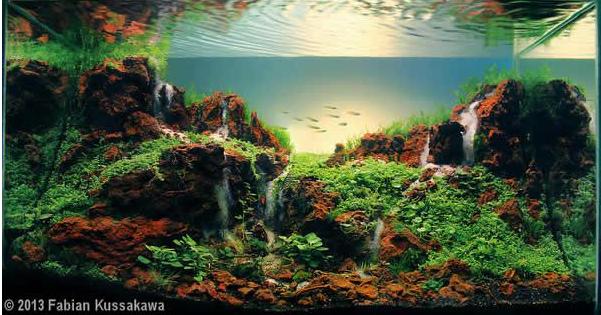 Pin de paco fran en c clidos acuario acuario agua dulce y paisajismo acu tico - Mega jardines de olarizu ...