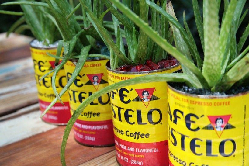 Cafe Bustelo coffee can planter ideas Gardening Indoor