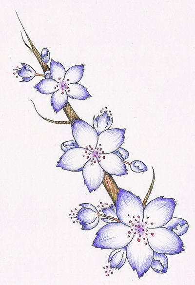 Purple Cherry Blossom Tattoo Google Search Cherry Blossom Tattoo Flower Drawing Blossom Tattoo