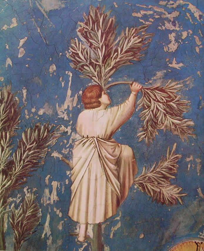 Giotto, Padova