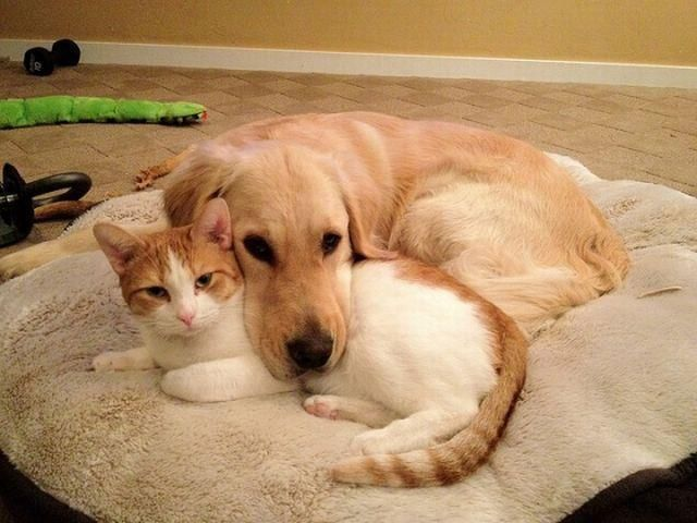 cat #dog | Perro y gato juntos, Mascotas bonitas, Gatos y perros lindos