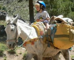 Atlas Mule Train in Morocco - perfect for young families on half term:   http://www.familiesworldwide.co.uk/holiday/atlas_mule_train.html