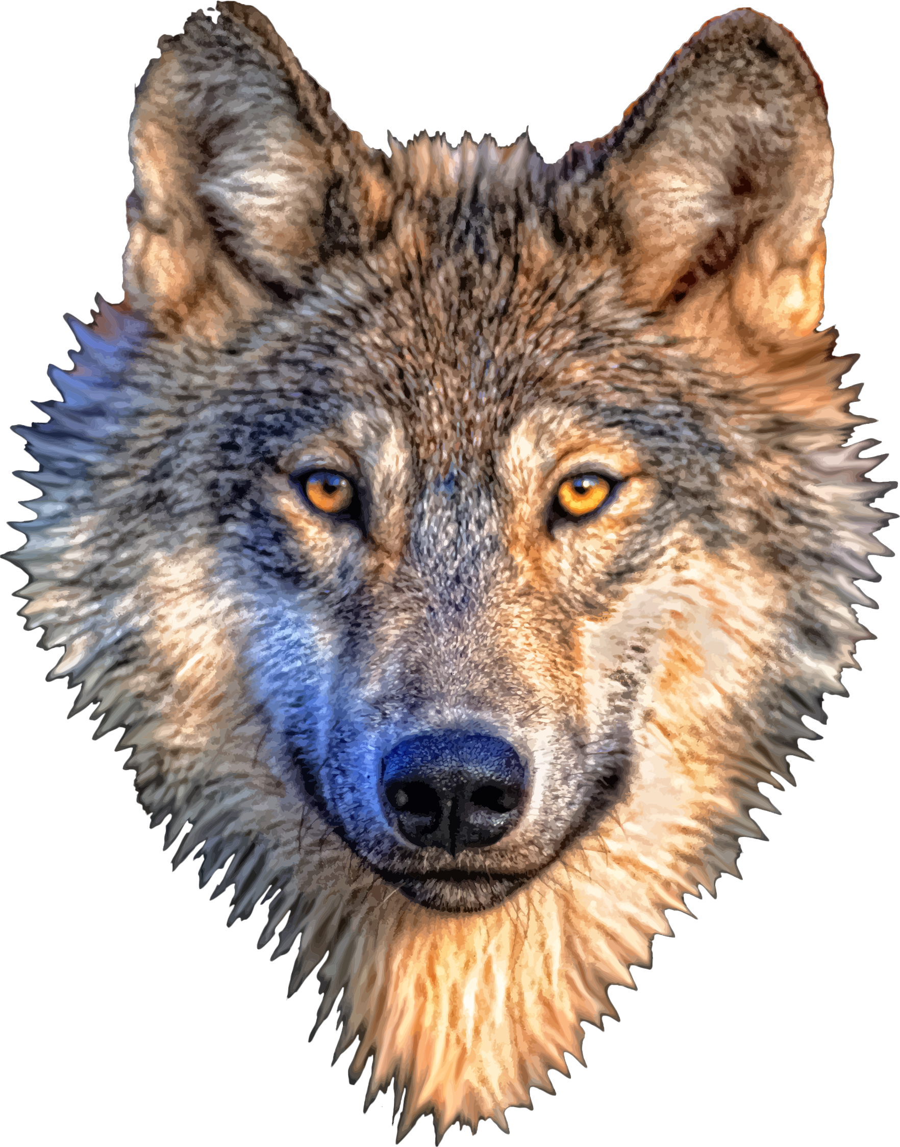 Wolf Head Wolf Dog Animals Wolf Head
