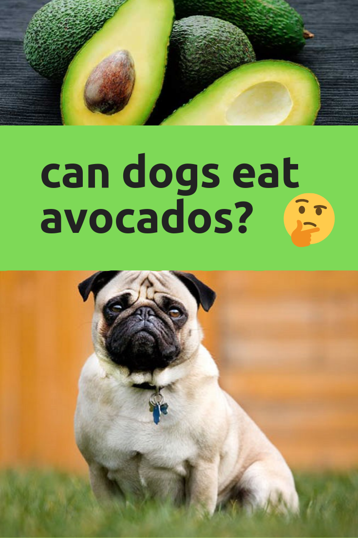can dogs eat avocados? Can dogs eat, Avocado for dogs