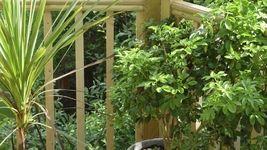 8 Zimmerpflanzen für positive Energie #sichtschutzfürbalkon
