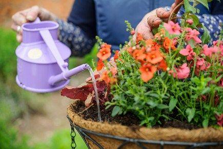 Cómo crear un colgante cesta de verano - Proyectos: Siembra - gardenersworld.com