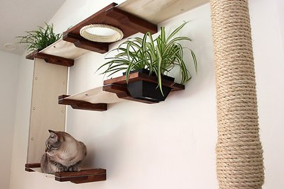 Catastrophicreations Cat Mod Wall Mounted Gardens Complex Cat Shelf Set Unfinished Natural Chewy Com Cat Shelves Cat Wall Shelves Mod Wall
