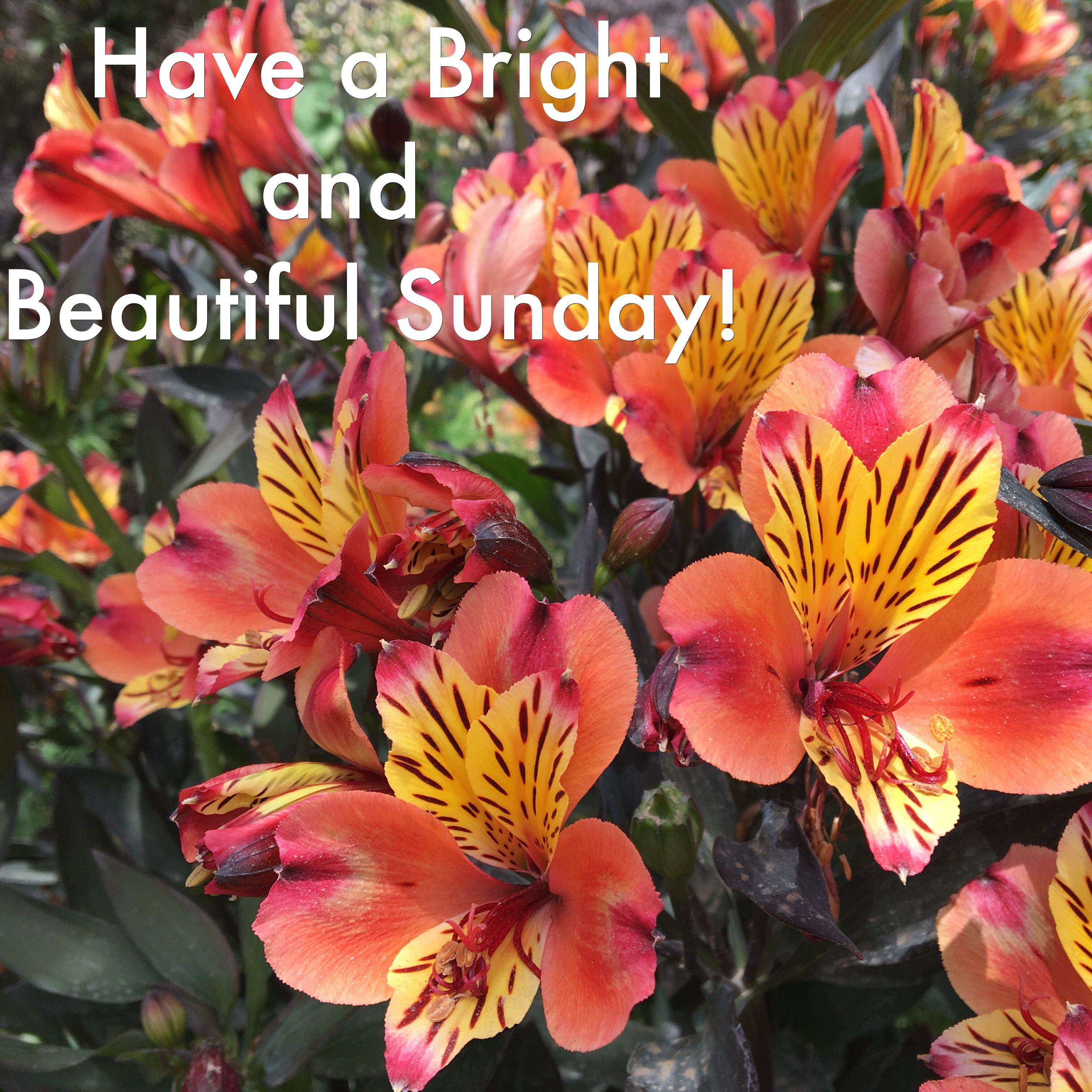 Happy sunday message to you with some pretty flowers happy sunday happy sunday message to you with some pretty flowers happy sunday theweekend flowers delight sweet mightylinksfo