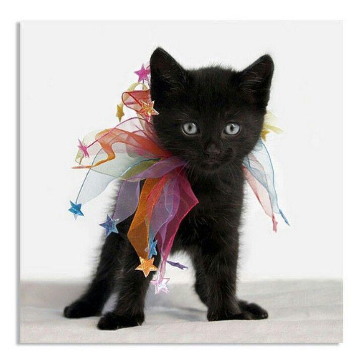 Cute black kitten♥♥