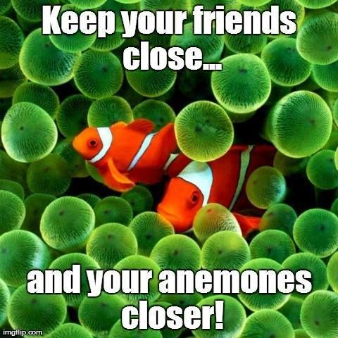 Keep your friends close… and your anemones closer!