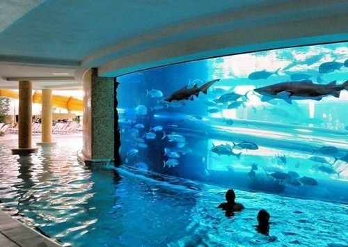 golden nugget pool las vegas theres a waterslide tube going through the shark tank im so not brave enough with the sharks but tropical fish would be