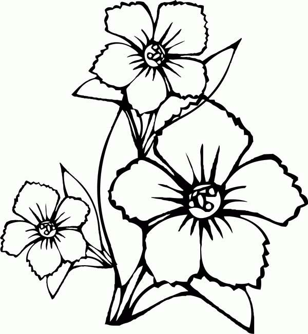 Coloring Drawing Flowers Designs Collections
