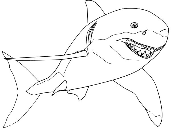 A Drawing Of Great White Shark From The Front Coloring ...