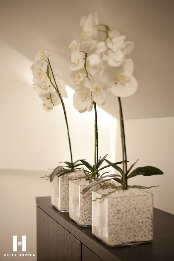 The Simple White orchid pot ORCHIDEEN Pinterest Deko blumen