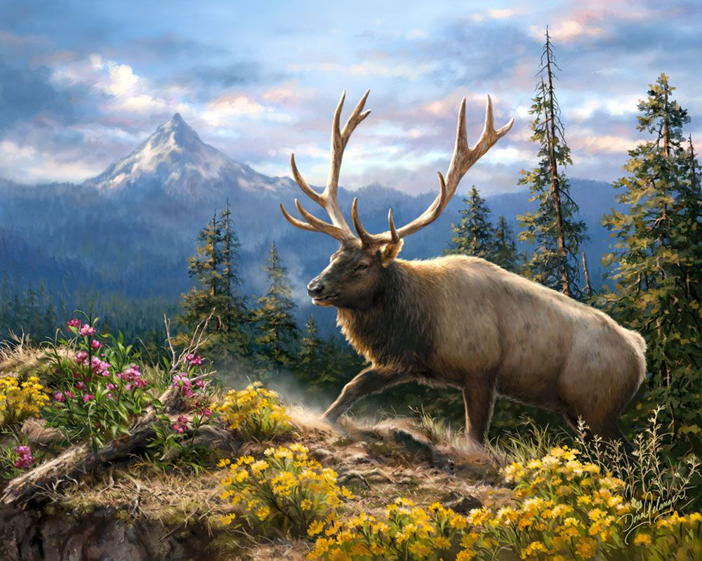 Deer Art, Art, Wildlife Paintings