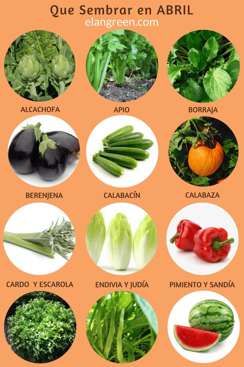 370 Ideas De Hortalizas Verduras Frutas Hortaliza Verduras Dieta Saludable