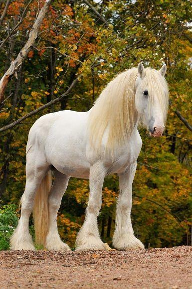 Photo of Shire Horses haben ein auffallendes Gebäude
