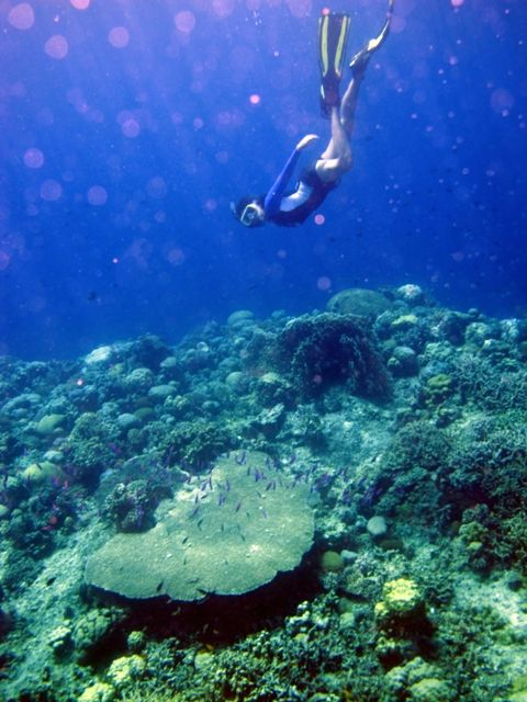Free Diving Off Mabaw Reef, Bohol, Philippines