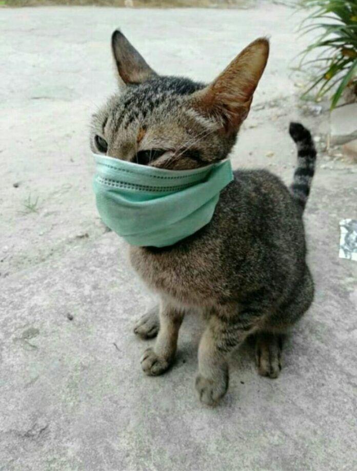 Feline Coronavirus – Can it Transfer to Humans? | BLOOMBYPETS
