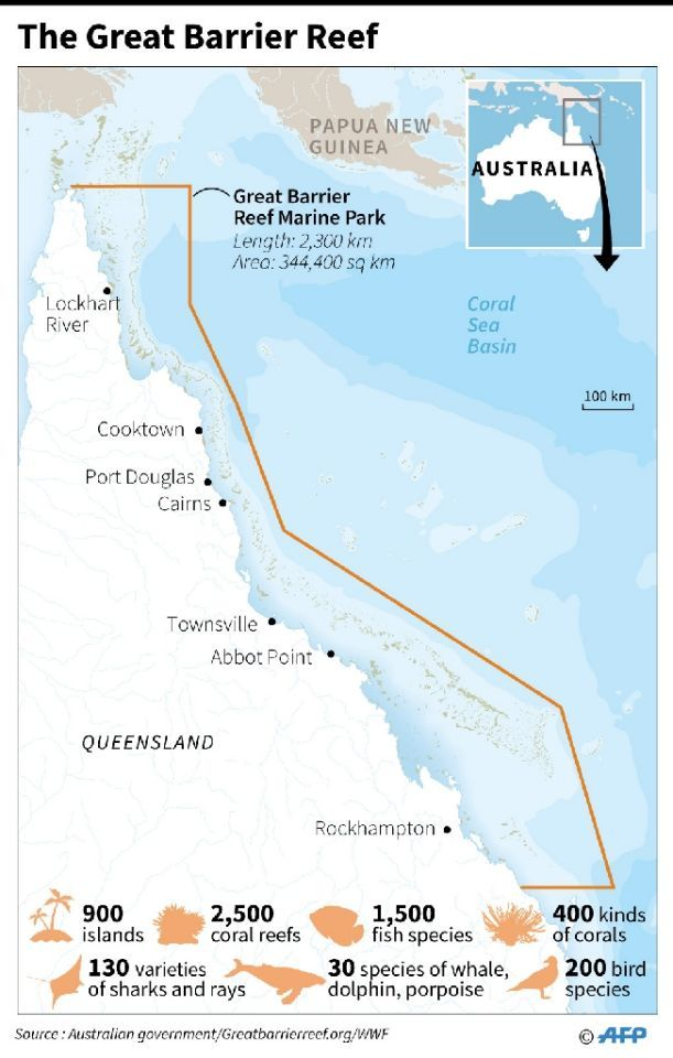 Many More Corals Die In Great Barrier Reef Bleaching Great Barrier Reef Reef Ocean Diagram