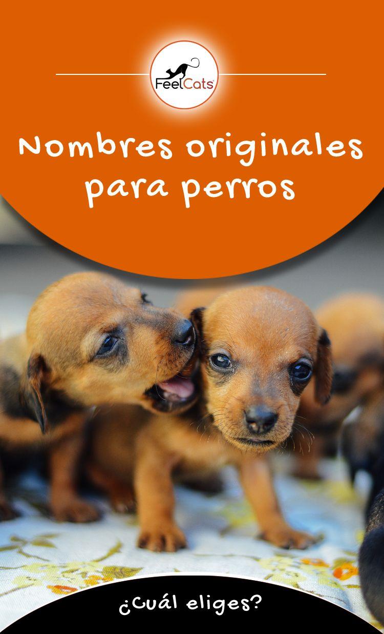 7 Ideas De Nombres Originales Para Perros Nombres Para Mascotas Nombres De Perros Perros