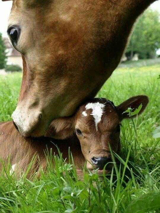 Pin by Debra on All Things Brown | Animals beautiful, Cute ...