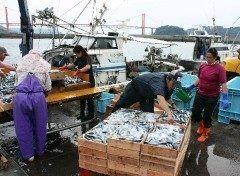 九州では雑煮のダシとして馴染みのアゴとびうおですが今アゴダシが空前のブームになっているんだそうです 長崎県平戸市の平戸魚市では1箱12キロ8800円と3年前の7.5倍に跳ね上がっているんだそうです ここ数年で平戸市はだしの島としての存在感を増しています tags[長崎県]