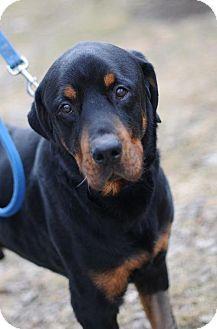 Fletcher Akron Oh Rottweiler Meet Fletcher A Dog For
