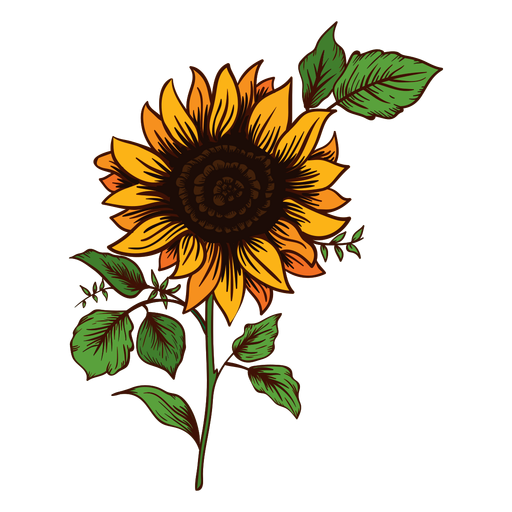Common Sunflower Drawing Botanical Illustration Watercolor Painting Png Clipart Ar Botanical Illustration Watercolor Sunflower Drawing Sunflower Illustration