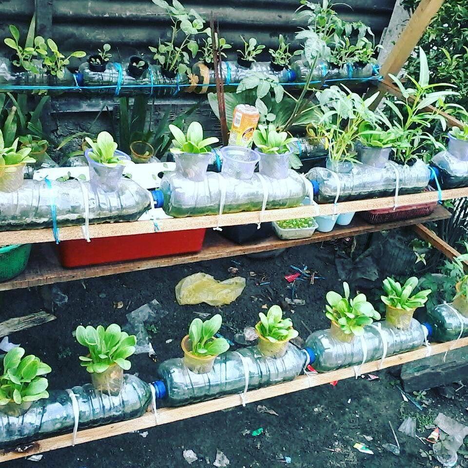 Hidroponik Kreatif Pemanfaatan Limbah Dan Barang Barang Bekas