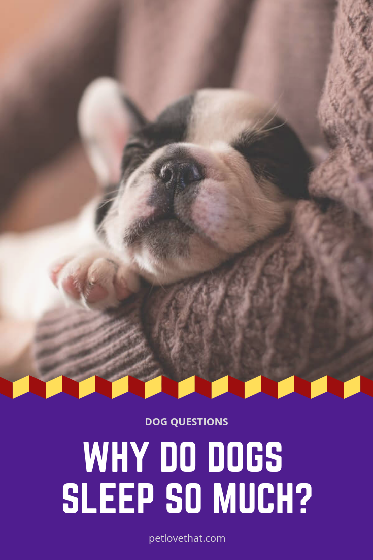 Do You Wonder Why Your Dog Is Sleeping So Much Do Not Worry About This Sleep Is Essential To All Animals Sleep Allows The Bo Sleeping Dogs Dogs Dog Behavior