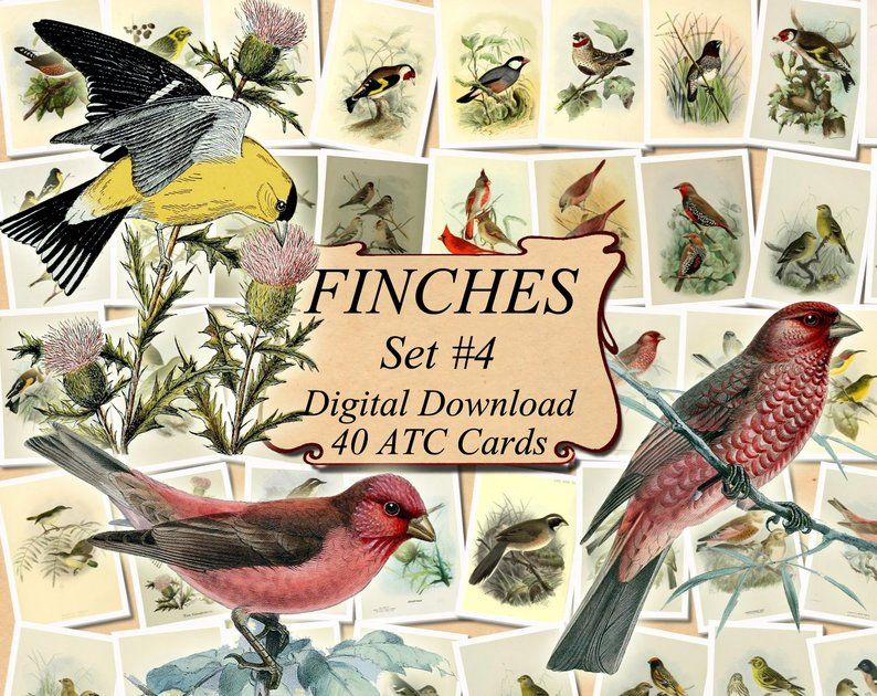 FINCHES Set 4 digital collage sheet 40 ATC cards Printable | Etsy