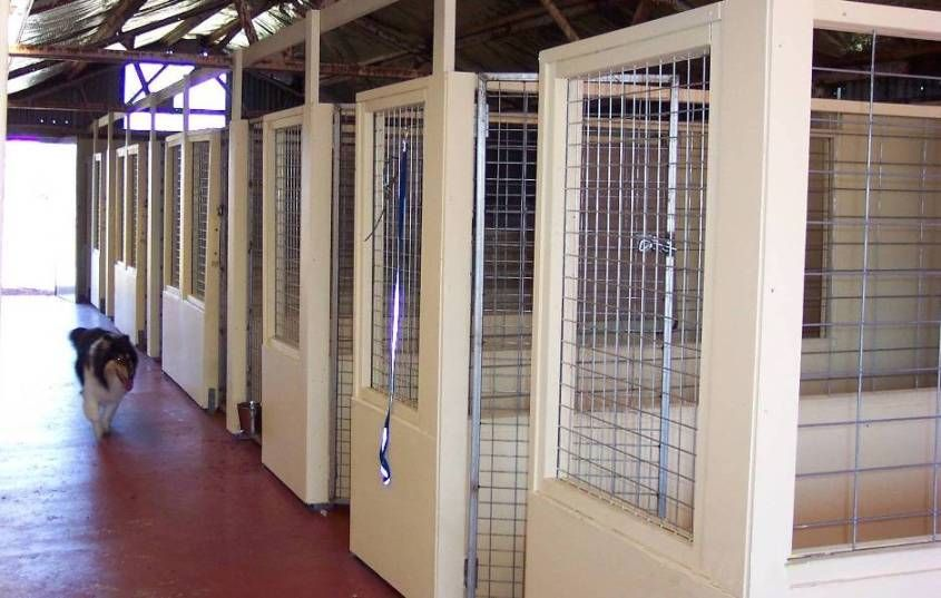Aesthetically Pleasing Dog Boarding Kennels Commercial Dog