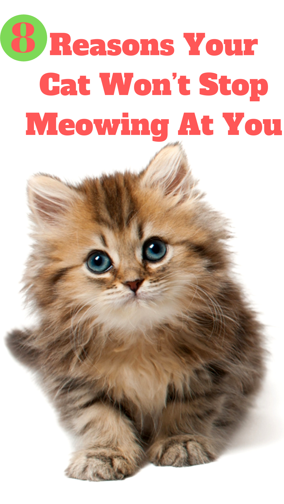 8 Reasons Your Cat Won T Stop Meowing At You Cats Cat Care Meows