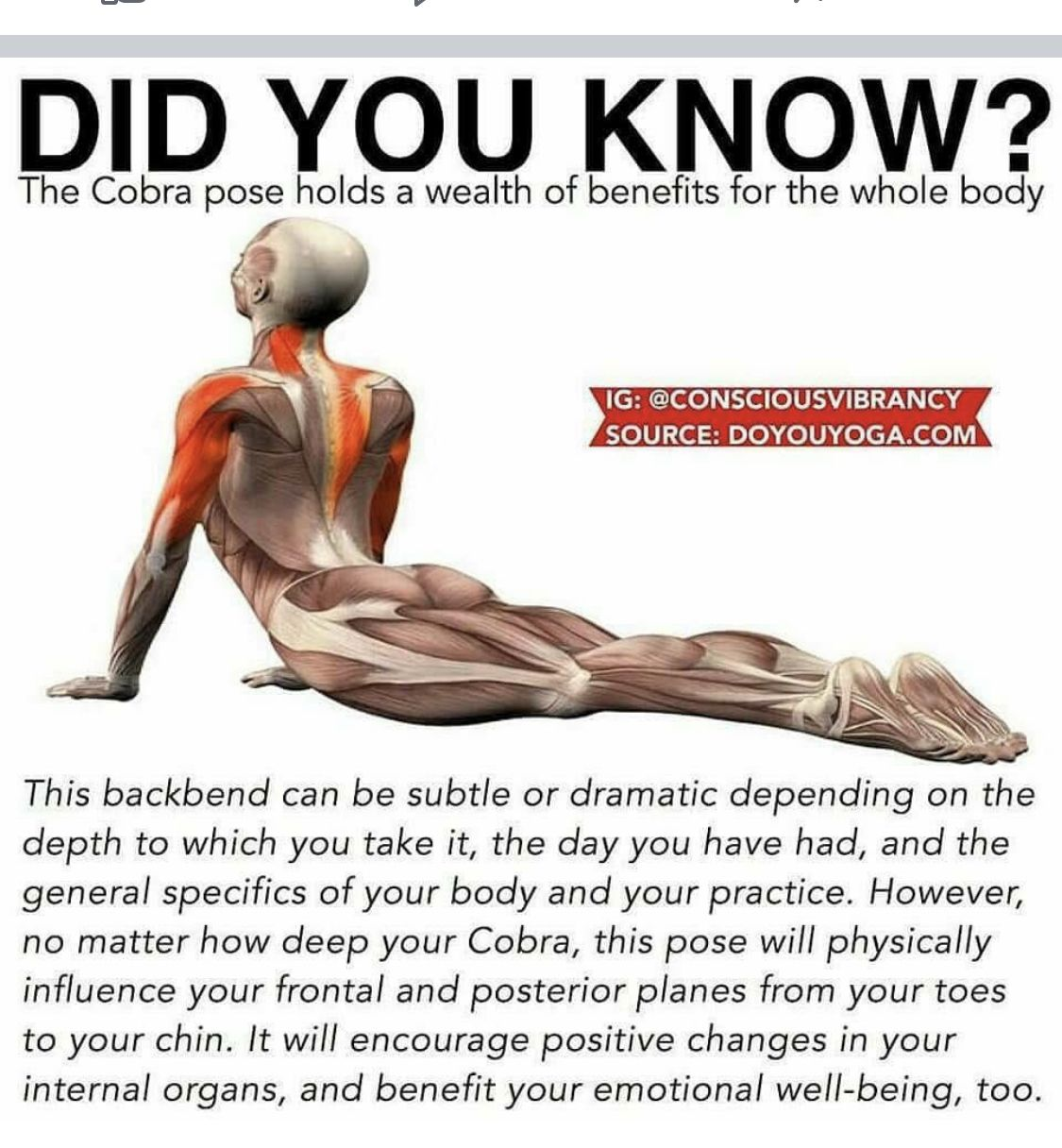 Pin By Lynette Ickes On Exercise Yoga Benefits Yoga Anatomy