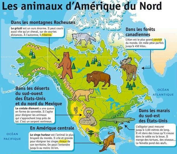 Les Animaux D Amerique Du Nord Amerique Du Nord Animaux Animaux Afrique